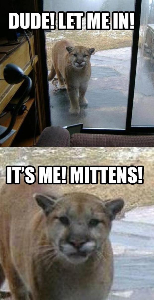 It's me, Mittens!